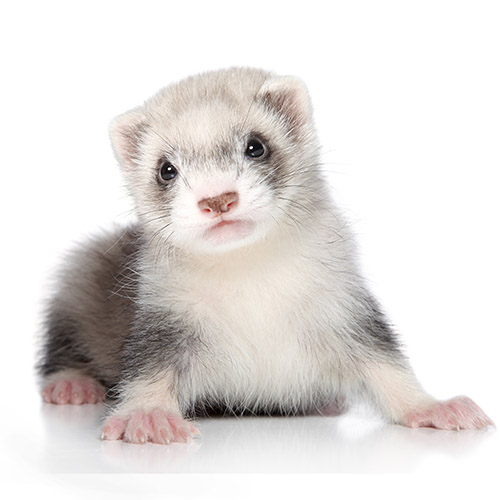 buy small animals in Racine, WI buy puppies and pet supplies in Racine, WI