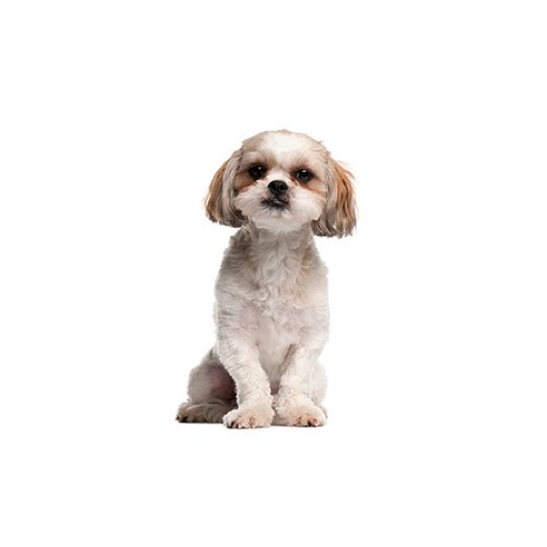 Best Mixed Small Dog Breeds