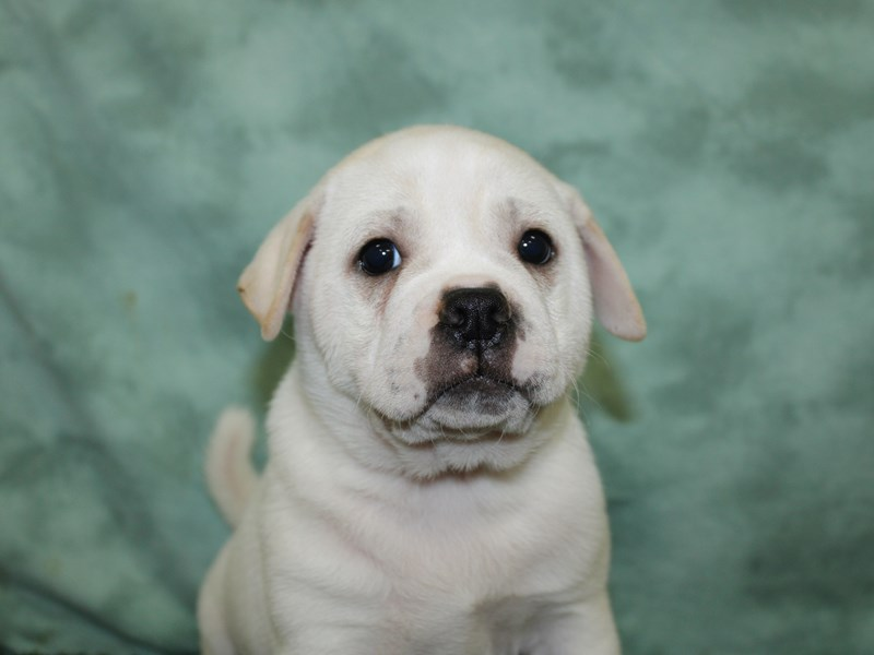 Ori Pei-Male-CREAM WHITE-2581786-Petland Dalton